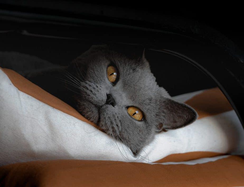 横になる猫
