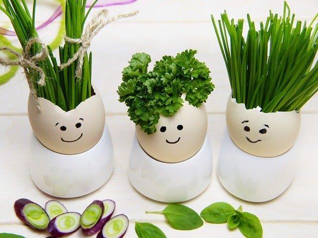 玉子から植物