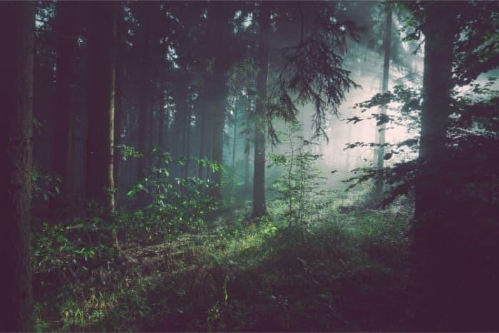 深い森の音